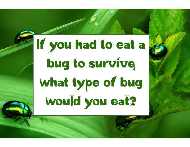4_11_2016 eat a bug